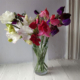 Kindness in the form of sweet peas